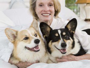 How to Trim a Welsh Corgi