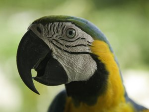 How Do Parrots Use Their Beaks to Eat?