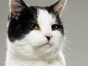 Is Cat Pheromone Safe for Cats?