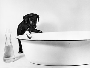 Why Do Shampoos Say Not to Use on Young Puppies?