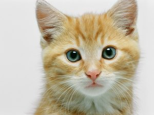 Homeopathic Remedies for Hairball Removal in Cats