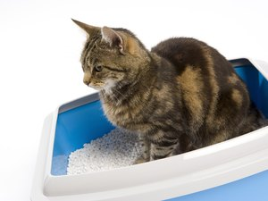 Asthma & Clumping Kitty Litter in Cats