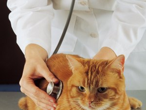False Positive Heartworm Tests in Cats
