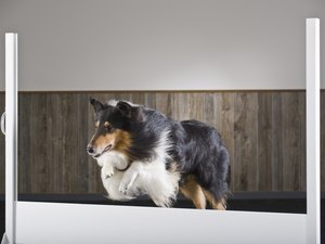 Types of Surfaces for Dog Agility
