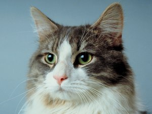 How Long Does It Take Buspirone to Start Working in Cats?