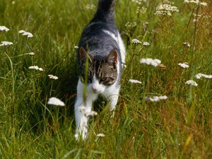 Neurological Diseases in Cats