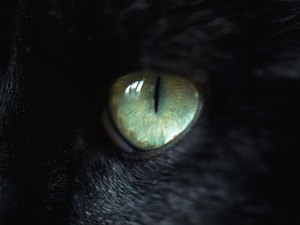 What Causes Cat Iris Melanoma?