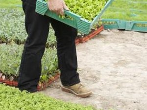 The Job Description of a Lettuce Farmer
