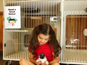 How to Help Out Shelters for Kittens & Puppies