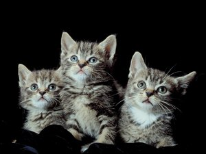 What Are the Causes of Weakness in Kittens?