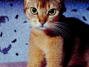 What Are the Dangers of De-Clawing Cats With Lasers?