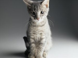 Signs of Ear Mites in Kittens
