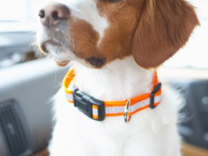 Temperature Guidelines for Dogs in Cars