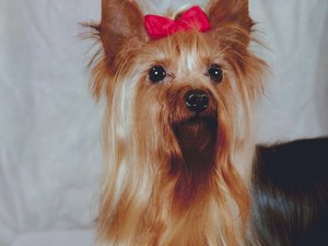 How to Make Ribbon Bows for Dogs
