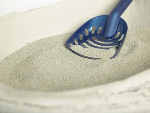 How to Change Cat Litter From Nonclumping to Clumping
