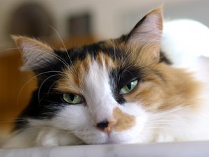 Feline Cat Behavior Changes With Uneven Pupils