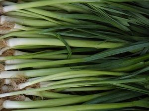 Nutrients for 1/2 Cup of Green Onions
