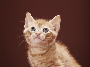 What Does It Mean if a Kitten's Tail Is Quivering?