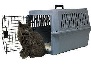 Do Cats Have to Be Quarantined to Enter Puerto Rico?