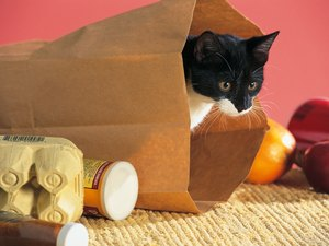 Cats' Instinct Behavior and Sitting in Boxes