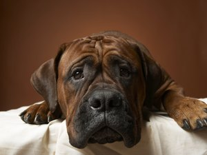 Home Treatment for Diarrhea in Dogs