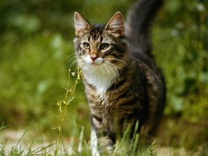 Animals That Are Poisonous to Cats