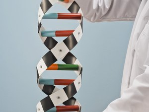 Clinical Geneticist Education & Training