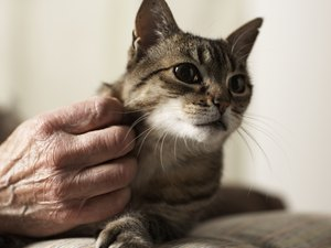 What Drugs for Hyperthyroidism That Go in the Ears Are Used in Cats?