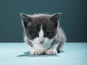 How Long Does It Take for the First Litter of Kittens to Be Born?