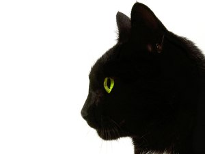 Enucleation Surgery for Cats