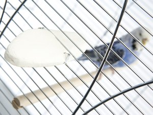 How to Move a Budgie to a New Cage