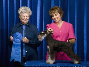 What Does It Mean When a Dog Is AKC Certified?