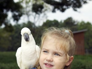How Much to Feed an Umbrella Cockatoo?