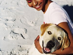 What to Do for Oily Fur on a Labrador Retriever