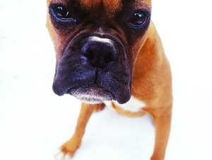 What Are the Signs of an Agitated Dog?