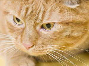 What Causes Blockage in Cats?