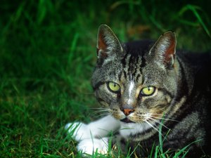 Urinary Stones in Cats