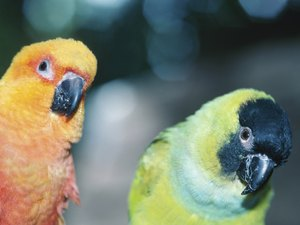 Can a Parakeet Survive After Their Partner Dies?