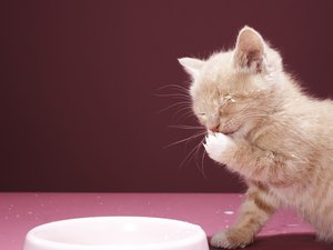 Probiotic Feline Treats