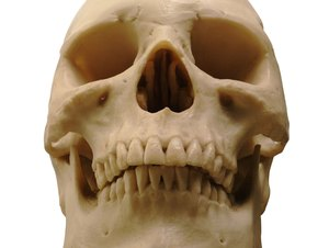 Job Description of a Forensic Anthropologist