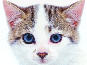 Over-the-Counter Treatments for Ear Mites in Kittens