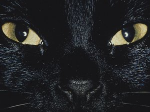 Do Cats' Eyes Glow Brighter in Different Lights?
