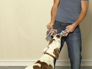 How to Stop Dogs Destroying the House While Away