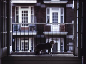 How to Stop Cats From Jumping Into an Upstairs Window
