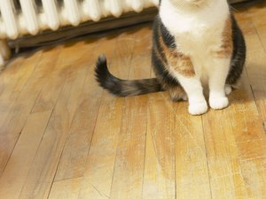 Hormone Injections for Cats in Heat