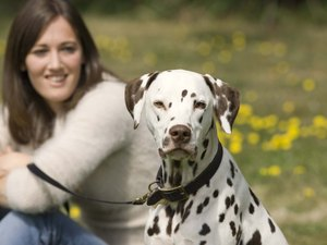 how to get rid of kennel cough in dogs