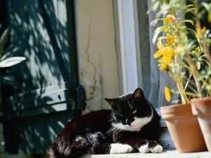 Natural Ways to Stop Cats From Urinating in Potted Plants