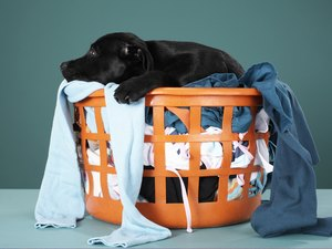 Why Dogs Chew on People's Clothing