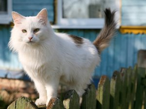 How to Help a Pregnant Feral Cat