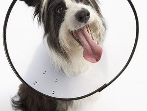 Can You Use an E-Collar to Keep a Dog From Biting During a Nail Trim?